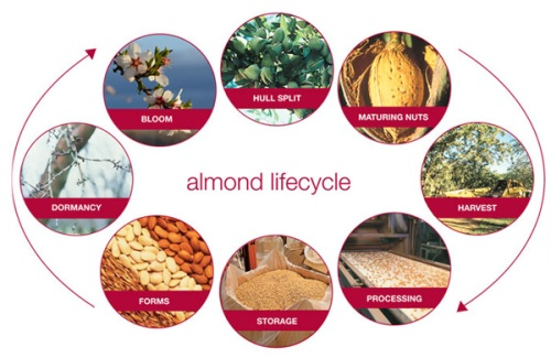 Visuals in this post courtesy of The Almond Board of CA Almond Board