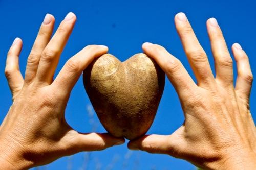 Heart Shaped Vegetable Potato 014-1