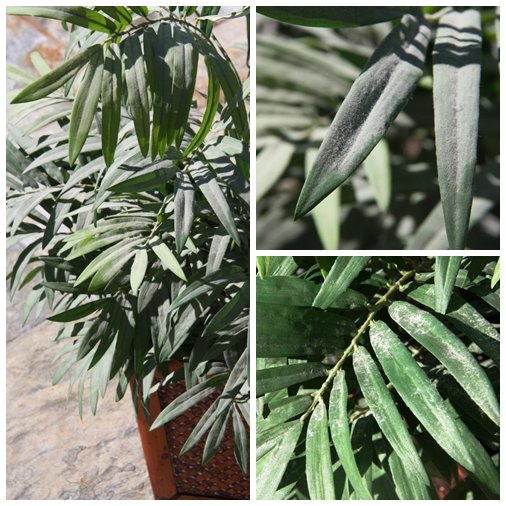 Homemade silk plant cleaner cheap simple balanced grettie silk plant cleaner collage 1 mightylinksfo